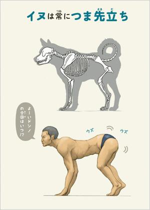 くらべる骨格動物図鑑.jpg