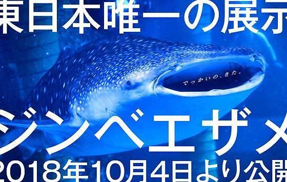 八景島ジンベイザメ.jpg