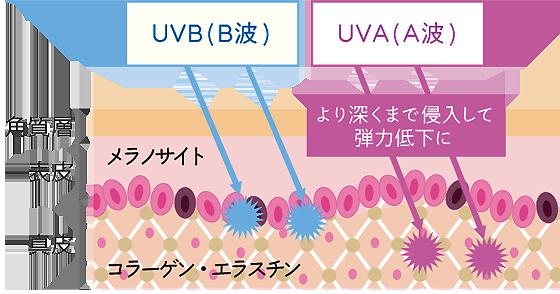紫外線A波B波.png